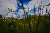 2014-06-26-husqvarna-131